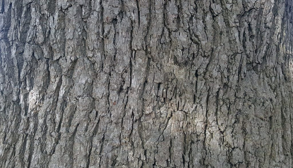 Mature tree raised texture