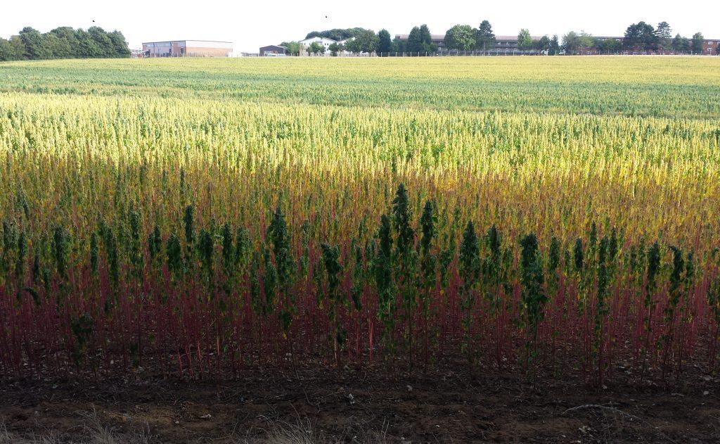 Multi-coloured field