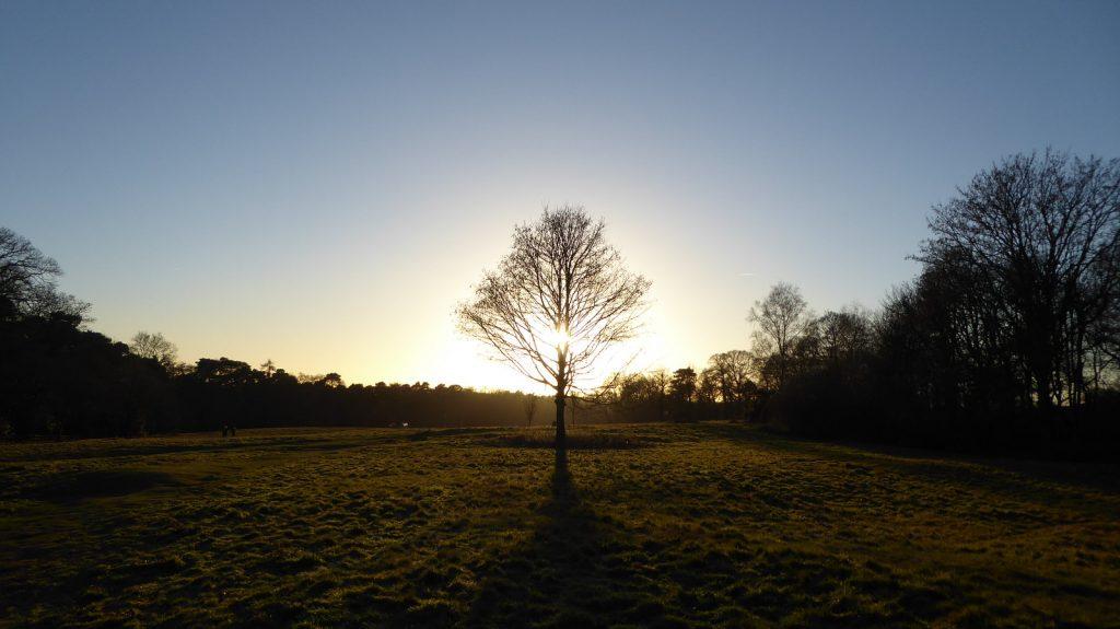 Sun shining through the tree