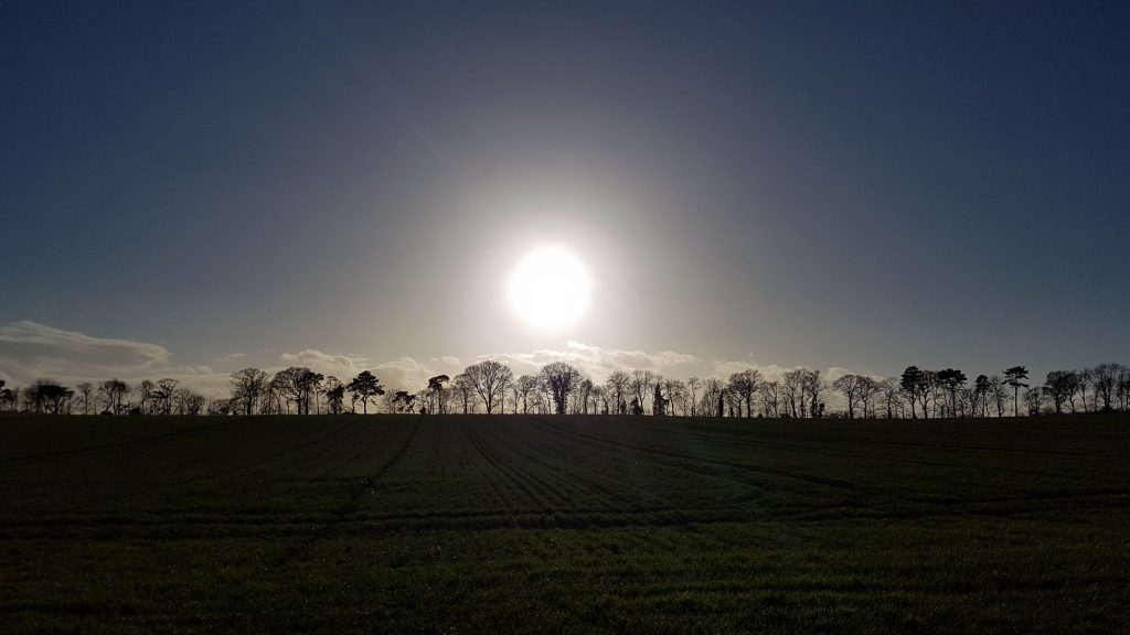 Sun over silhouetted trees