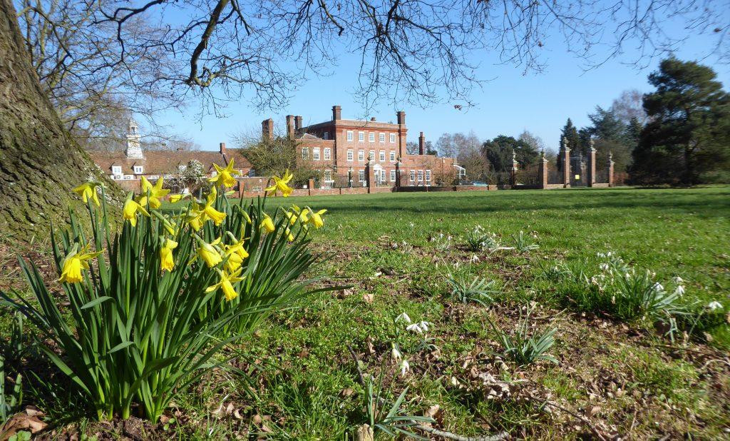 Daffodils at the Grange