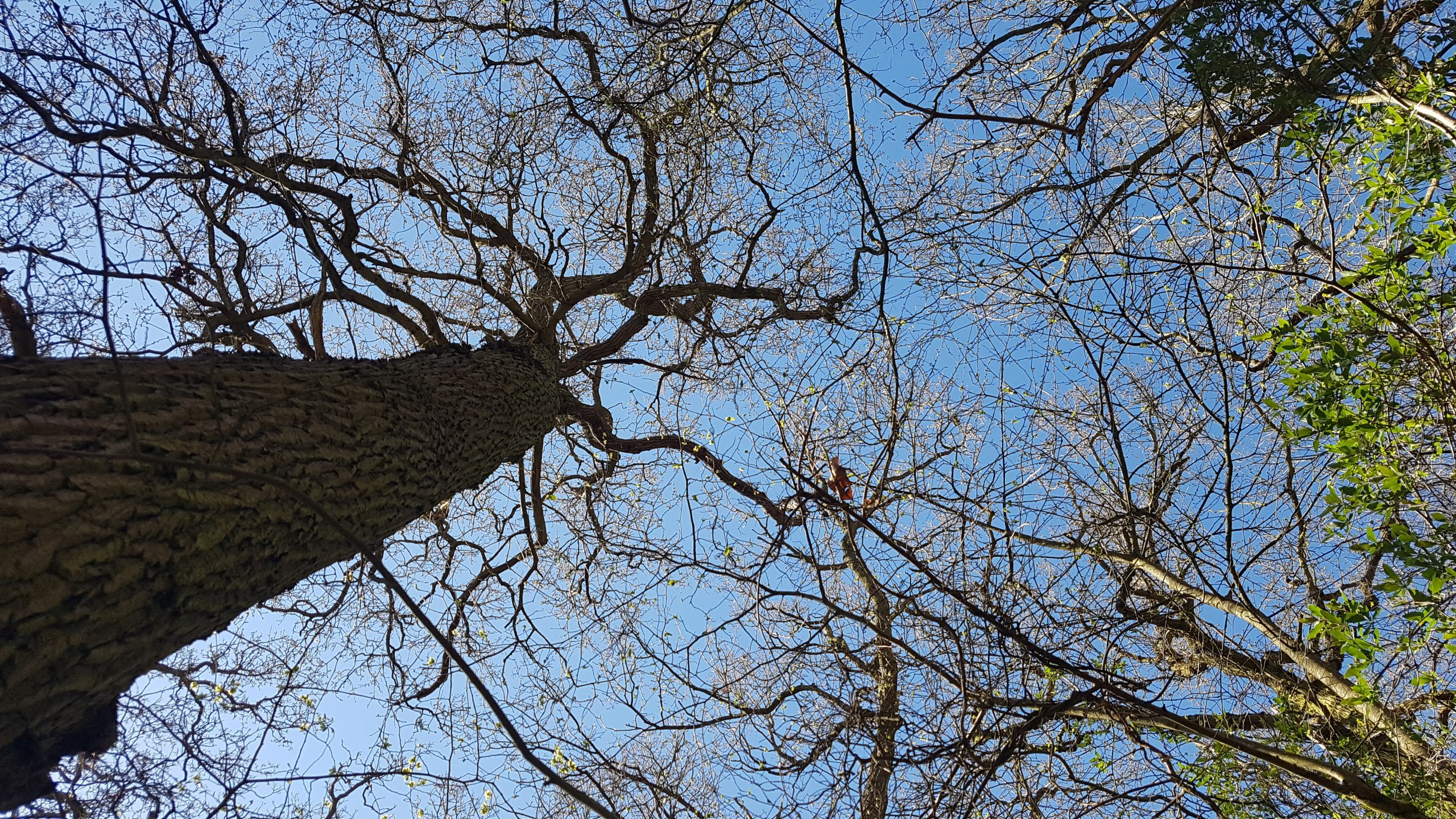 A view up into the roof of the tree line