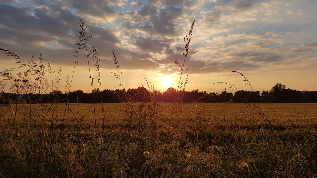Sundown over golden fields
