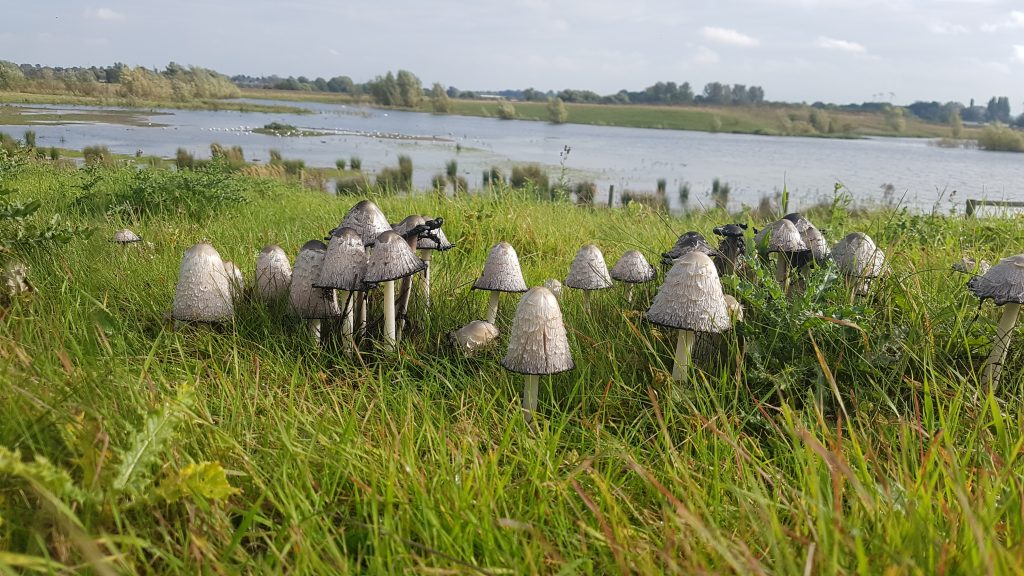 Toadstool army